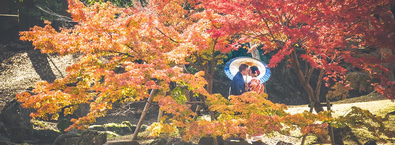 1奈良公園6_メインビジュアル