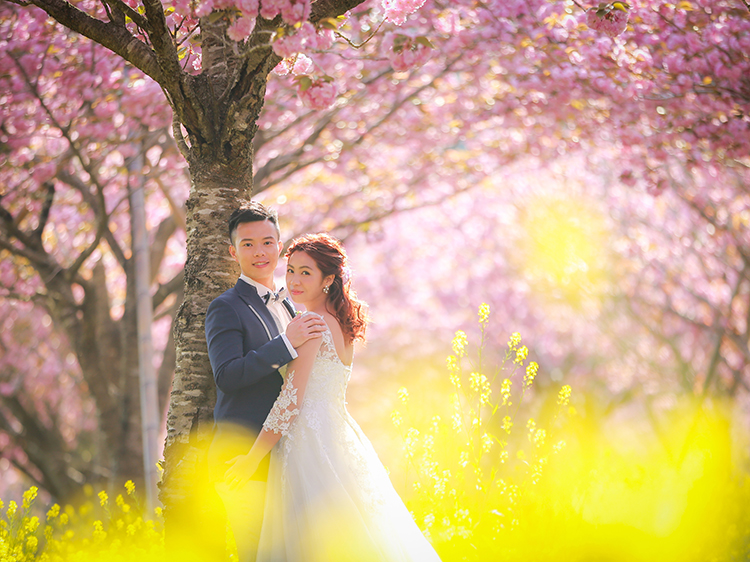 富士 桜6
