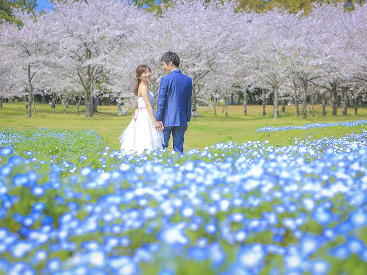 海の中道 桜3